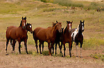 HORSES IN CROW RESERVATION IN FORT SMITH MONTANA