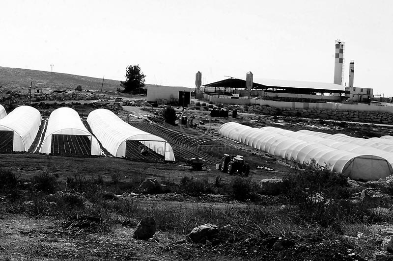 Foreign workers work in the green houses of the Jewish settlement of Susyah, in the West Bank. Amnesty International has accused Israel of denying Palestinians adequate access to water while allowing Jewish settlers in the occupied West Bank almost unlimited supplies. Photo by Quique Kierszenbaum