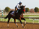 Venetian Harbor, trained by trainer Richard Baltas, exercises in preparation for the Breeders' Cup Filly & Mare Sprint at Keeneland Racetrack in Lexington, Kentucky on November 5, 2020.