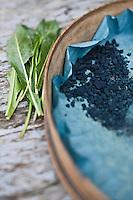 Europe/France/Midi-Pyrénées/32/Gers/Lectoure: Bleu pastel de Lectoure - Feuilles de Pastel, Isatis tinctoria, et pigment