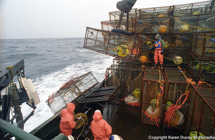 """Crewmen get a crab pot ready to be offloaded on the fishing vessel Polar Lady during the opilio crab season in the Bering Sea in January and February of 1995.  Crewman Gary Soper (right top) is working """"the stack"""" which could be up to 250 pots by regulation in the 1990's for this size vessel. The Bering Sea is known for having the worst storms in the world.  Crab fishing in the Bering Sea is considered to be one of the most dangerous jobs in the world.  This fishery is managed by the Alaska Department of Fish and Game and is a sustainable fishery.  The Discovery Channel produced a TV series called """"The Deadliest Catch"""" which popularized this fishery."""