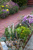 Succulent garden bed by brick path leading to house in drought tolerant front yard, Richmond California