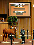 September 14, 2015: Hip 73 Tapit - Amelia filly consigned by Gainesway.  Candice Chavez/ESW/CSM
