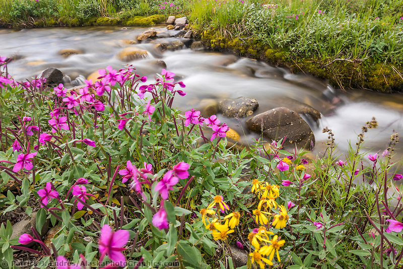 Pink blossoms of dwarf fireweed by a stream in Denali National Park, Alaska