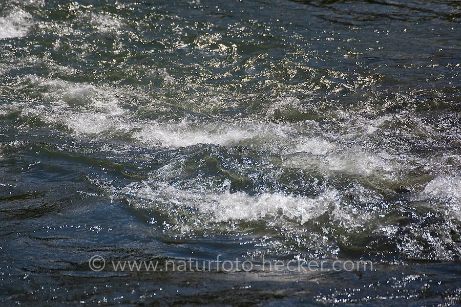 Bach, Gebirgsbach, Fluß, Fluss, Wasser, Wasseroberfläche, Alpen, Österreich, Kärnten, Möll. Stream, rivulet in the mountains, alps, Austria, Carinthia