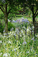 Camassia trial beds