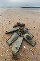 Nursehound/Bull Huss (Scyliorhinus stellaris) empty egg cases / mermaid's purse. Anglesey, Wales, UK. December.