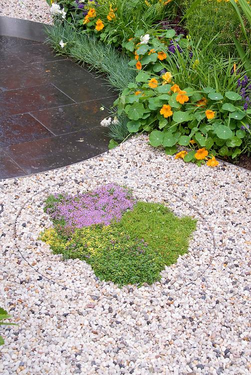 Thymus thymes herbs in gravel edged with stell circle, Tropaeolum nasturtiums, Lavandula angustifolia lavender herb, patio blocks