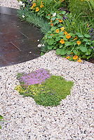 Thymus thymes herbs in gravel edged with stell circle, Tropaeolum nasturtiums, Lavandula angustifolia lavender herb, patio blocks