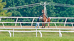 Animal Kingdom, winner of the 137th Kentucky Derby, stops and tosses exercise rider David Nava as he continues to train for the Belmont Stakes at the Fair Hill Training Center on June 1, 2011 in Fair Hill, Maryland.