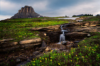 Mt. Reynolds, runoof stream and Avanche Lilies.Glacier National Park, Montana