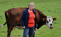 "BNPS.co.uk (01202 558833)<br /> Pic: ZacharyCulpin/BNPS<br /> <br /> New Forest Commoner Annie Cooper with one of her de-horned cows. Annie Cooper, who runs Acres Down Fram in Minstead, said: ""I take horns off my cows for animal husbandry reasons but I don't see that we should be made to do it because of people. ""If you went in to the jungle you wouldn't go and remove the claws from tigers or the tusks from elephants<br /> <br /> Hundreds of cows in the New Forest are having their horns removed following a worrying rise in cattle attacks on dog walkers.<br /> <br /> While many owners are agreeing to dehorn their livestock to reduce the risk of serious injury to the public, others object and compare it to 'going into the jungle to remove the claws from a tiger.'<br /> <br /> They blame a 'decline in sensible behaviour among forest users' for the increase in the attacks."