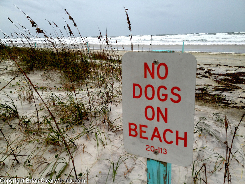 """""""No Dogs on Beach"""" sign, Daytona Beach, Florid.  iPhone photo from the archive of Florida-based freelance photographer Brian Cleary.  (Photo by Brian Cleary/ www.bcpix.com )"""