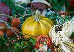 Deutschland, Herbstdekoration, Zierkuerbisse | Germany, autumn decoration, pumpkins