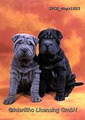 Xavier, ANIMALS, REALISTISCHE TIERE, ANIMALES REALISTICOS, dogs, photos+++++,SPCHDOGS1023,#a#, EVERYDAY