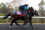 October 27, 2015: Talmada, trained by Roger Varian, owned by Sheikh Ahmed bin Rashid al Maktoum, is entered in the Breeder's Cup Filly & Mare Turf $2,000,000. Candice Chavez/ESW/CSM