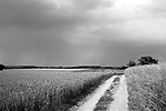 Europa, DEU, Deutschland, Nordrhein Westfalen, NRW, Rheinland, Niederrhein, Krefeld-Traar, Egelsberg, Agrarlandschaft, Feld, Acker, Getreide, Weizen, Anbau, Weg, Feldweg, Kategorien und Themen, Landwirtschaft, Landwirtschaftlich, Agrar, Agrarwirtschaft, Erzeugung, Landwirtschaftliche Produkte, Natur, Naturfoto, Naturfotos, Naturfotografie, Naturphoto, Naturphotographie, Landschaft, Landschaften, Landschaftsfoto, Landschaftsfotografie, Landschaftsphoto, Landschaftsphotographie<br /> <br /> <br /> [Fuer die Nutzung gelten die jeweils gueltigen Allgemeinen Liefer-und Geschaeftsbedingungen. Nutzung nur gegen Verwendungsmeldung und Nachweis. Download der AGB unter http://www.image-box.com oder werden auf Anfrage zugesendet. Freigabe ist vorher erforderlich. Jede Nutzung des Fotos ist honorarpflichtig gemaess derzeit gueltiger MFM Liste - Kontakt, Uwe Schmid-Fotografie, Duisburg, Tel. (+49).2065.677997, <br /> archiv@image-box.com, www.image-box.com]