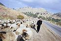 Kurdistan Irak 2000.Sur la route de Dohok, un berger arabe avec son troupeau. Suite à la sècheresse, les tribus arabes de la plaine d'Irak sont autorisées par les autorités kurdes à venir avec leurs troupeaux dans les montagnes.Iraq 2000.An Arab shepherd
