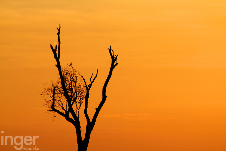 Dead tree at sunrise in Yellow Waters, Kakadu National Park, Northern Territory