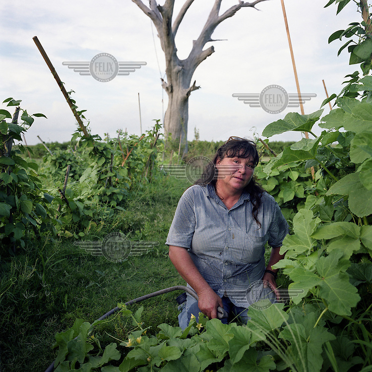 Susie Danos has planted melons, cucumbers beans and okra in her garden in the predominantly Native American community of Isle Jean Charles, Louisiana. After years of storm flooding, some residents fear that the soil is contaminated by residue from offshore oil drilling. The Native American tribes that lived along the coast were self sufficient at fishing and farming for generations until massive coastal erosion robbed them of much of their native land. Frequent salt water intrusion kills plants and trees like the dead oak tree visible in the background. Lack of fresh water for drinking, gardening and livestock has been driving Native American communities further inland since the 1940s.