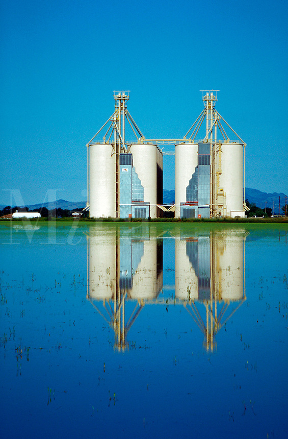 Grain elevators reflected in flooded rice field.