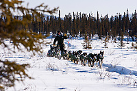 Jeff King on the trail heading into the Cripple checkpoint 1/2 way into the during the 2010 Iditarod