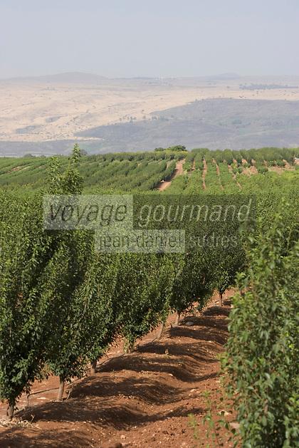 Asie/Israël/Galilée/env de Rosh Pinah: oliveraies et monts du Golan