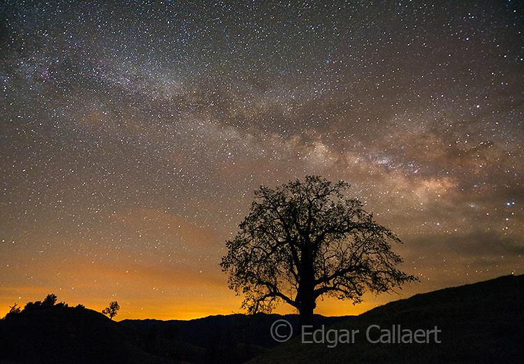 Milky Way, Coast Live Oak, Los Padres National Forest, Big Sur, Monterey County, California