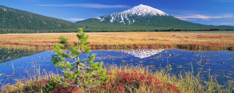 M00018L.tiff  Mt. Bachelor reflection and fall huckleberry with Lodgepole Pine tree. Oregon