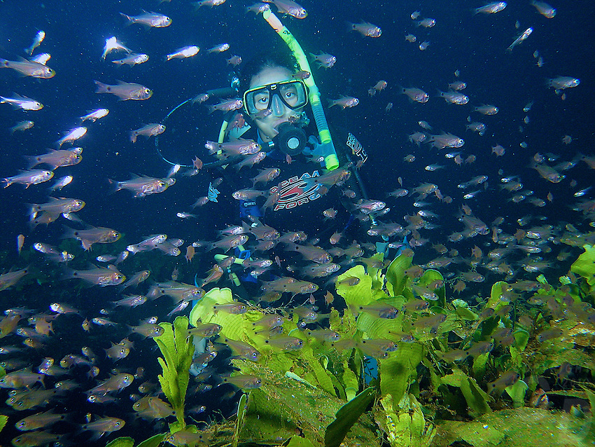 Diving and snorkeling the ship and aircraft wrecks in the Truk Lagoon, Chuuk Micronesia, South Pacific