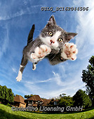 REALISTIC ANIMALS, REALISTISCHE TIERE, ANIMALES REALISTICOS, cats, paintings+++++,USLGSC162044506,#A#, EVERYDAY ,photos,fotos,pounce,cat,cats,kitten,kittens,Seth