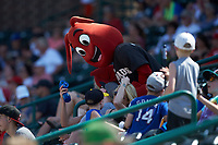 """Hickory Crawdads mascot """"Conrad"""" interacts with fans during the South Atlantic League game against the Greensboro Grasshoppers at L.P. Frans Stadium on May 26, 2019 in Hickory, North Carolina. The Crawdads defeated the Grasshoppers 10-8. (Brian Westerholt/Four Seam Images)"""