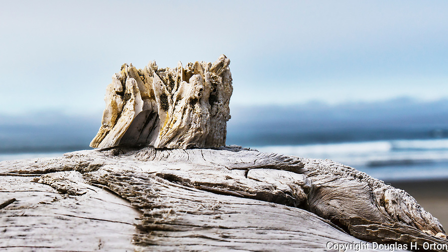 Castle on the hill, barnacle beach sculpture, Kalaloch Beach in Olympic National Park, Washington.  Beaches in the Kalaloch area of Olympic National Park, identified by trail numbers, are remote and wild.  Olympic Peninsula, Olympic Mountains, Olympic National Park, Washington State, USA.