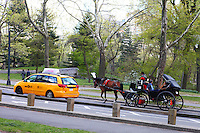 horse cab in the park
