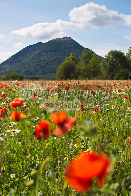 Europe/France/Auverne/63/Puy-de-Dôme/Parc Naturel Régional des Volcans: Le Puy de Dome et la Chaine des Puys
