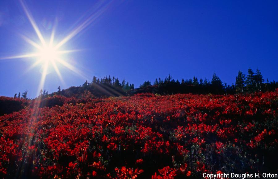Paradise Meadows in evening sun, showing fall colors near Mt. Rainier