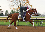 Point Of Honor, trained by trainer George Weaver, exercises in preparation for the Breeders' Cup Distaff at Keeneland Racetrack in Lexington, Kentucky on November 1, 2020. /CSM