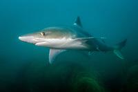 School Shark