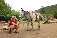 Photo story of Philmont Scout Ranch in Cimarron, New Mexico, taken during a Boy Scout Troop backpack trip in the summer of 2013. Photo is part of a comprehensive picture package which shows in-depth photography of a BSA Ventures crew on a trek. In this photo a Philmont Ranger keeps a close watch over a burro that just arrived with a BSA Venture crew at Pueblano in the backcountry of the  Philmont Scout Ranch.   <br /> <br /> The  Photo by travel photograph: PatrickschneiderPhoto.com