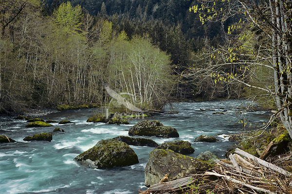 Elwha River between Lake Mills and Lake Aldwell, Olympic National Park, WA.  Spring.