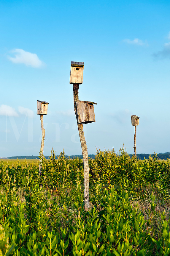 Birdhouses in salt marsh, Sandwich, Cape Cod, MA, Massachusettes