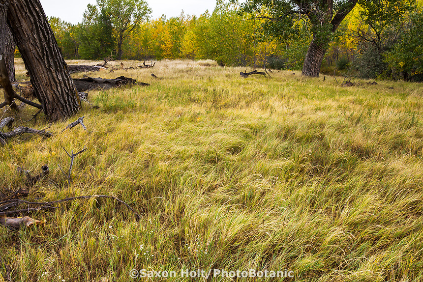 Grasses in autumn landscape West Bijou Ranch, Strasburg Colorado; managed by Savory Institute,