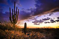 McDowell Mountain Saguaro Sunset - Arizona - Scottsdale - Sonoran desert