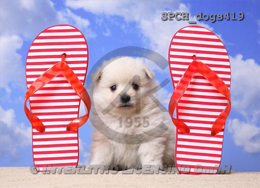 Xavier, ANIMALS, dogs, photos(SPCHdogs419,#A#) Hunde, perros