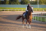 HALLANDALE BEACH, FL - JANUARY 14:   <br /> California Chrome with exercise rider Dihigi Gladney on the track for 5 furlong breez  at Gulfstream Park. (Photo by Arron Haggart/Eclipse Sportswire/Getty Images