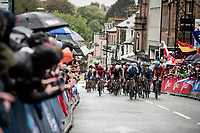 up the final straight<br /> <br /> Elite Men Road Race from Leeds to Harrogate (shortened to 262km)<br /> 2019 UCI Road World Championships Yorkshire (GBR)<br /> <br /> ©kramon