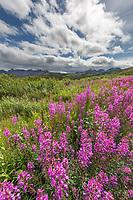 Sable Pass, Denali National Park, Alaska.