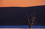 Dead acacia tree in Dead Vlei; Namib-Naukluft National Park,  Namib Desert, Namibia