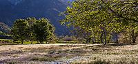 Southern California Montane Botanic Garden at The Wildlands Conservancy Oak Glen Preserve
