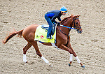 LOUISVILLE, KY - MAY 04: Gun Runner, trained by Steven Asmussen and owned by Winchell Thoroughbreds LLC and Three Chimneys Farm, exercises and prepares during morning workouts for the Kentucky Derby and Kentucky Oaks at Churchill Downs on May 4, 2016 in Louisville, Kentucky. (Photo by Scott Serio/Eclipse Sportswire/Getty Images)